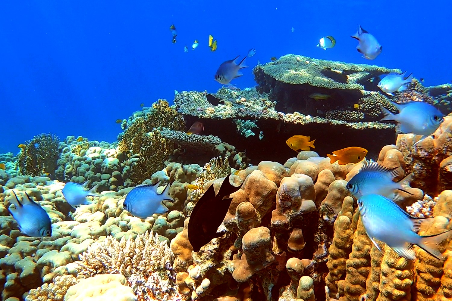 Red Sea 2 Dives Introduction To Scuba Diving